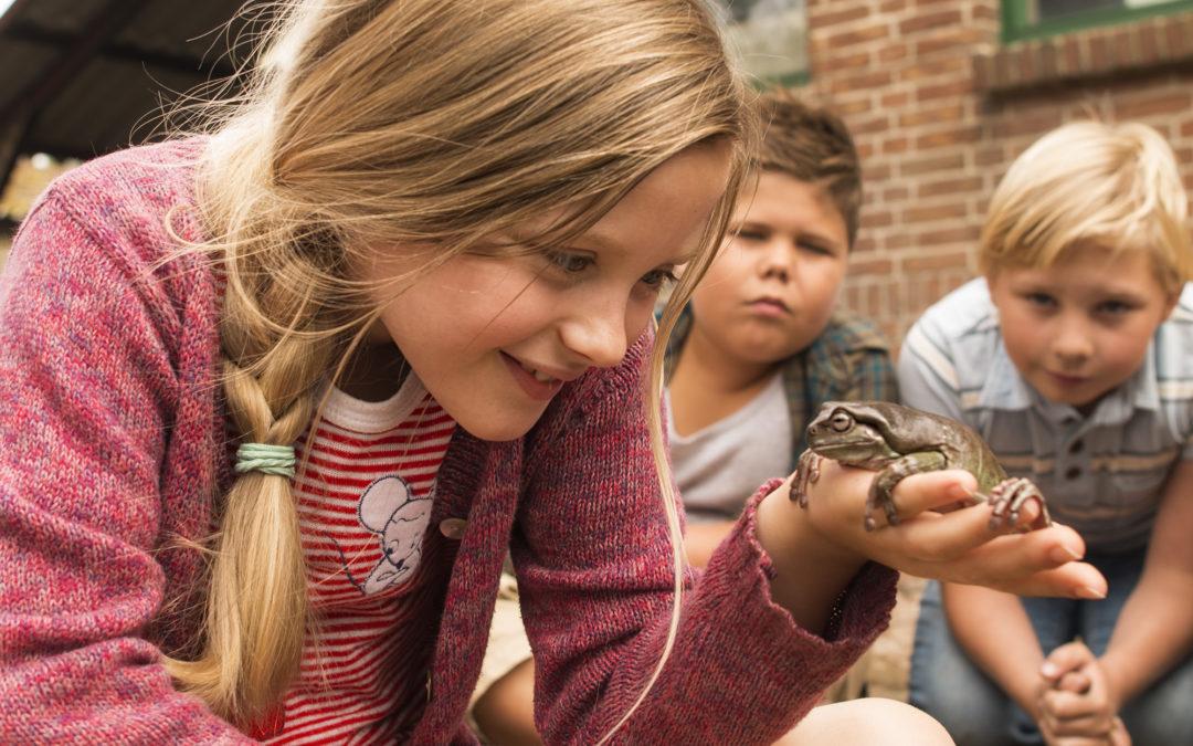 ZEBRASTREIFEN: Hilfe, unser Lehrer ist ein Frosch