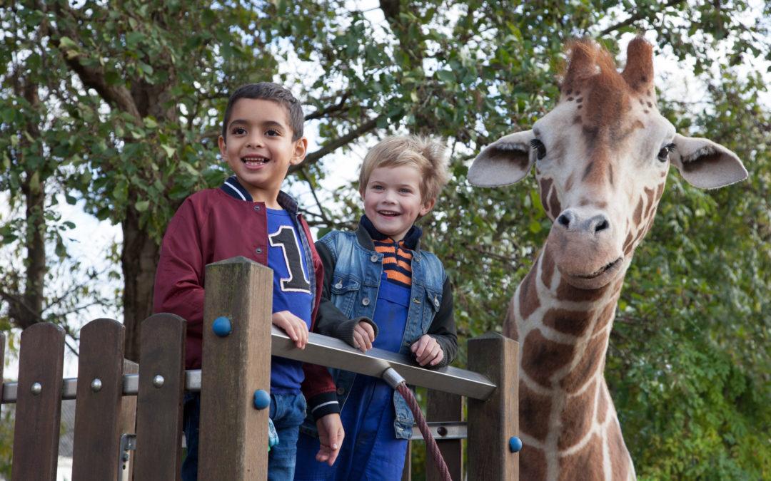 ZeBrAsTrEiFeN: Mein Freund, die Giraffe